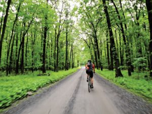 A cyclist biking through the forest on the Frederick Historical Bicycle Loop